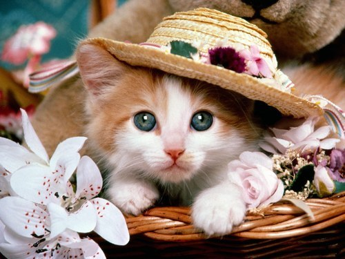 Cute-babies-pets-and-animals-16887702-500-375
